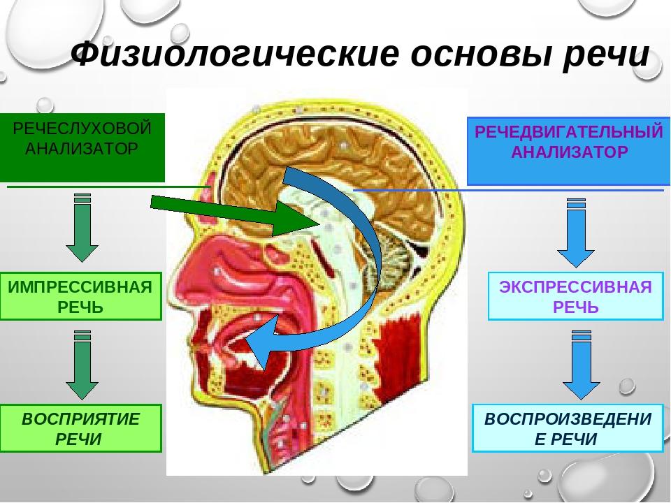 физиологические основы речи